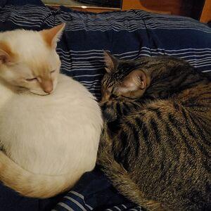 Coala Cat