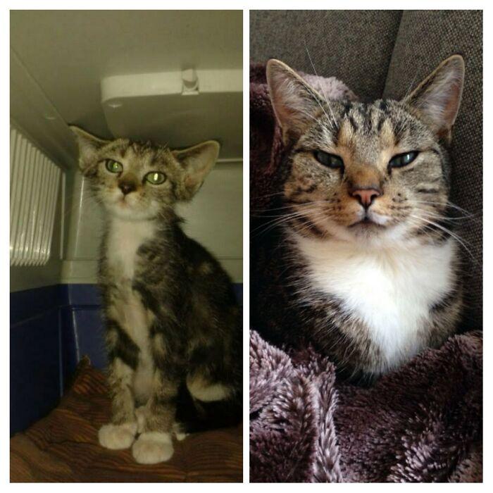 Our Cat Leo, Left The Frightened Little Gremlin Kitten We