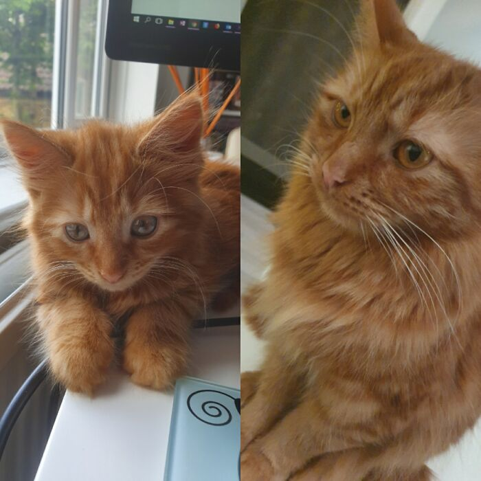 Ingrosso At 2 Months And 2 Years. He Is A Fierce Ginger Boy!