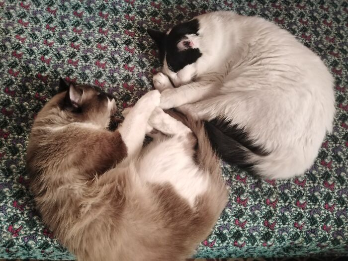 They Were Inseparable, But Now One Sleeps Alone Cuz His Buddy Is Gone.