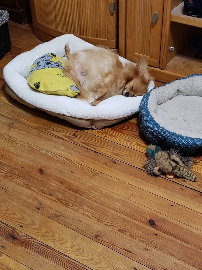 Sammie When He Can Really Sleep,because He Doesn't Have To Protect His Beds From His 2 Sisters