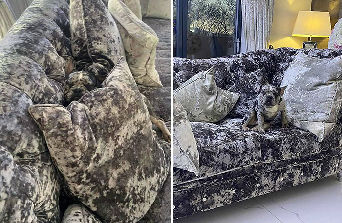 Woman Gets 2 New Dogs, Finds Out They Perfectly Match Her Couch