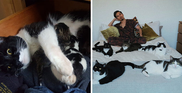 Guy Doesn't Even Own A Cat, Ends Up Finding 5 In His Room, Posts A 2-Year Update On The Cat Family