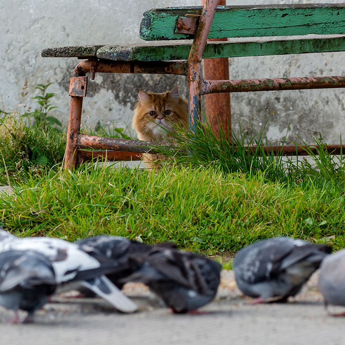 This Photographer Managed To Capture The Step-By-Step Process Of A Cat Chasing Pigeons (15 Pics)