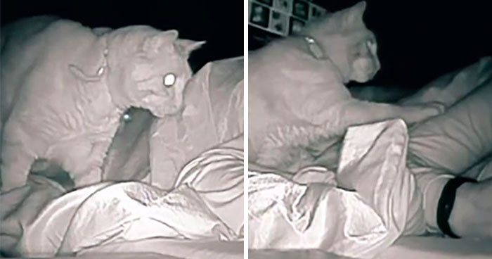 Woman Says She Always Wakes Up Tired, Sets Up A Camera To Witness Her Cat Constantly Tapping Her Body For 4 Hours Straight