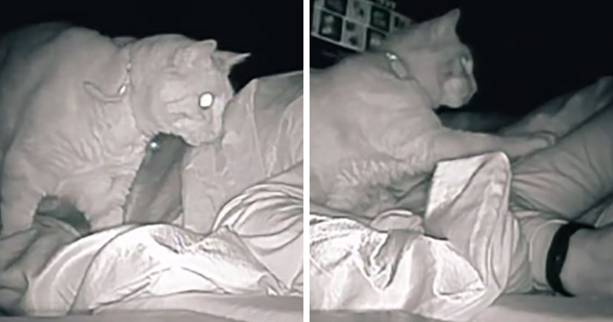 Tired Woman Discovers Her Cat Continually Poking Her As She Sleeps For 4 Hours After She Sets Up A Night Cam