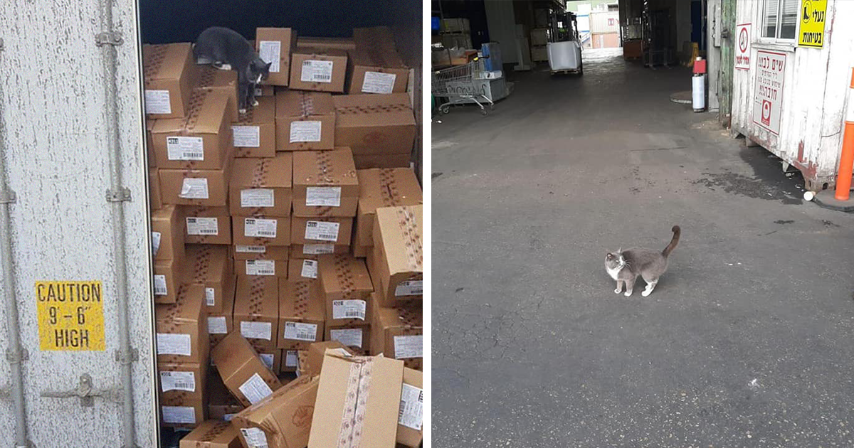 This Cat Traveled In A Shipping Container For Three Weeks Surviving Only On Candy - bored panda