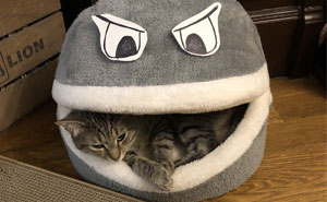 Owner Puts Eyes On His Cat's Bed And It Looks Like Cat Is Being Eaten By A Hangry Monster