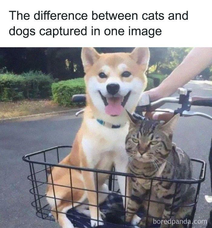 Funny-Cat-Memes-Jokes