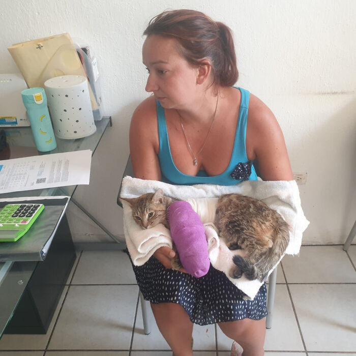 Vacationer Couple Will get Trapped In Mexico For A 12 months As a result of They Cannot Bear To Abandon Their Adopted Cat
