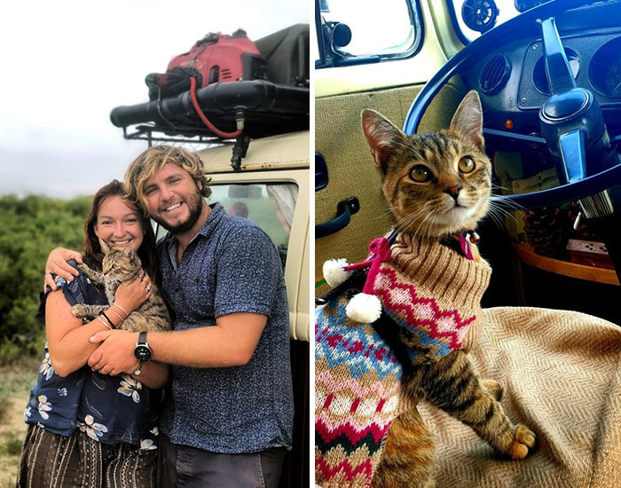 Couple Trapped In Mexico For A Year As They Refuse To Leave Without Their Rescued Cat