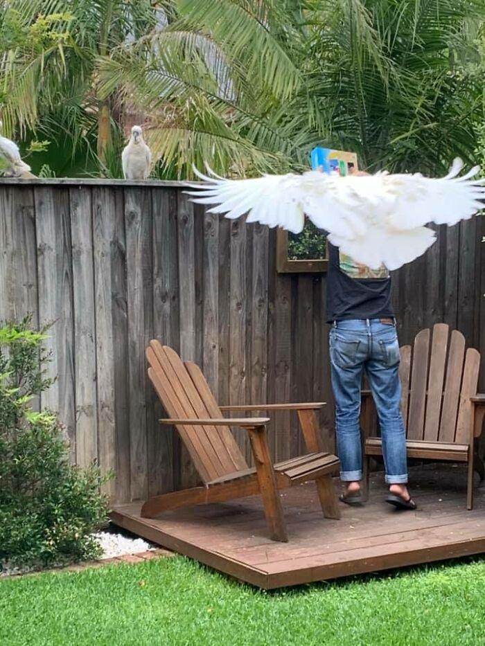 My Husband Has Wings