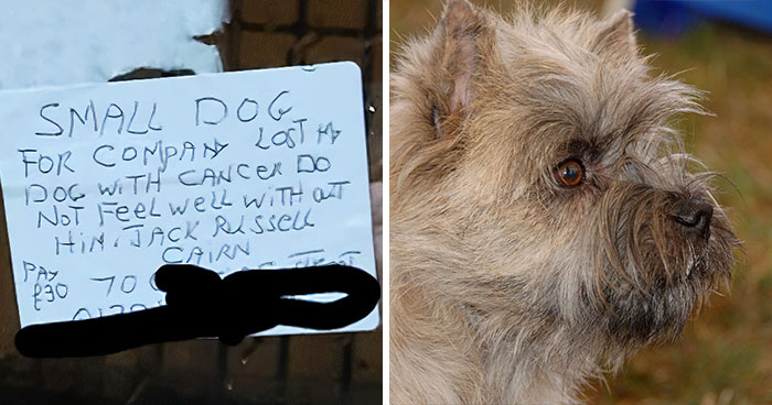 Delivery Driver Is Heartbroken By A Note From His Grieving Customer Looking For A Doggy Companion