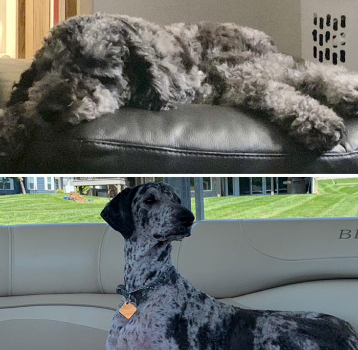 From Puppy To Dog In One Haircut