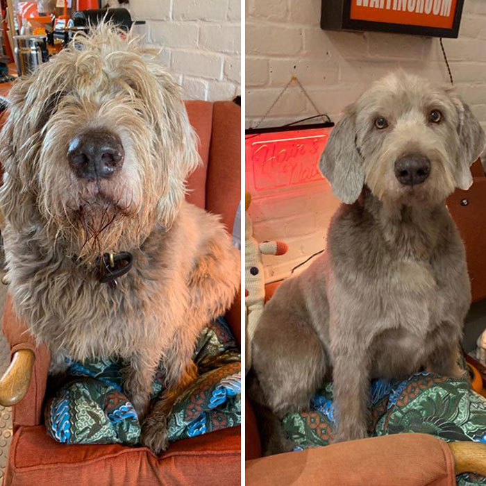 My Dog Before And After A Haircut