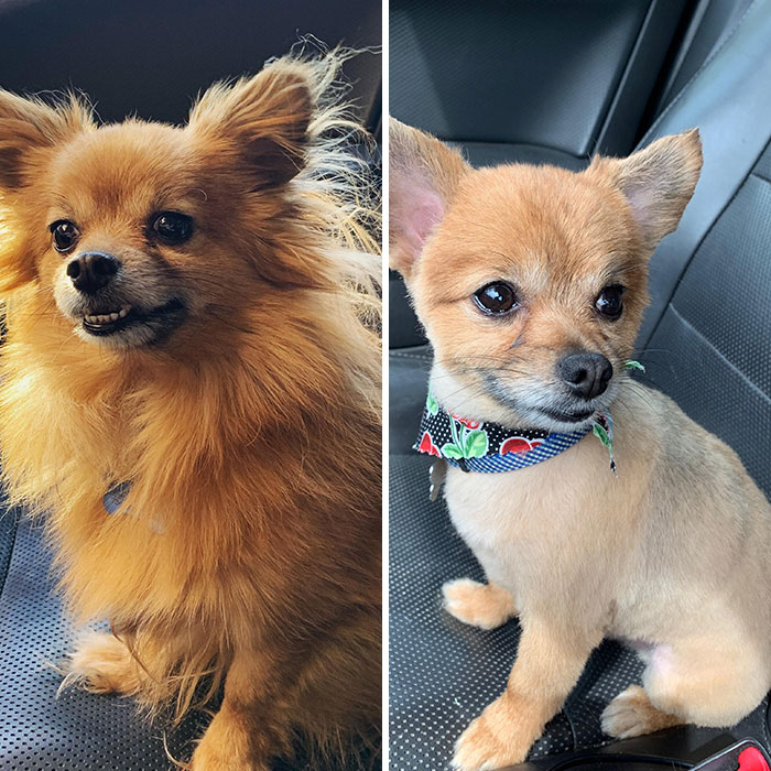 My Good Boy Got His Summer Haircut