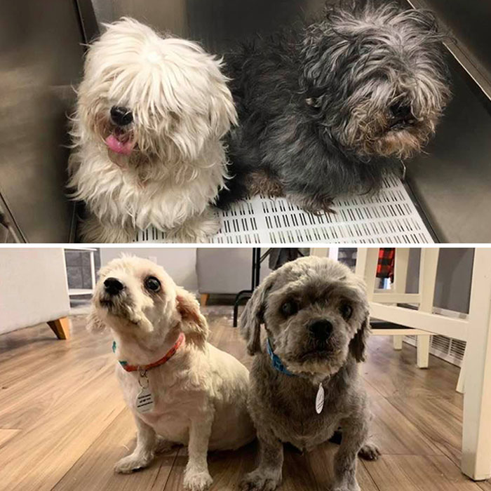 What A Difference A Haircut Makes. Latest Fosters 13-Year-Old Vileda And 10-Year-Old Swiffer