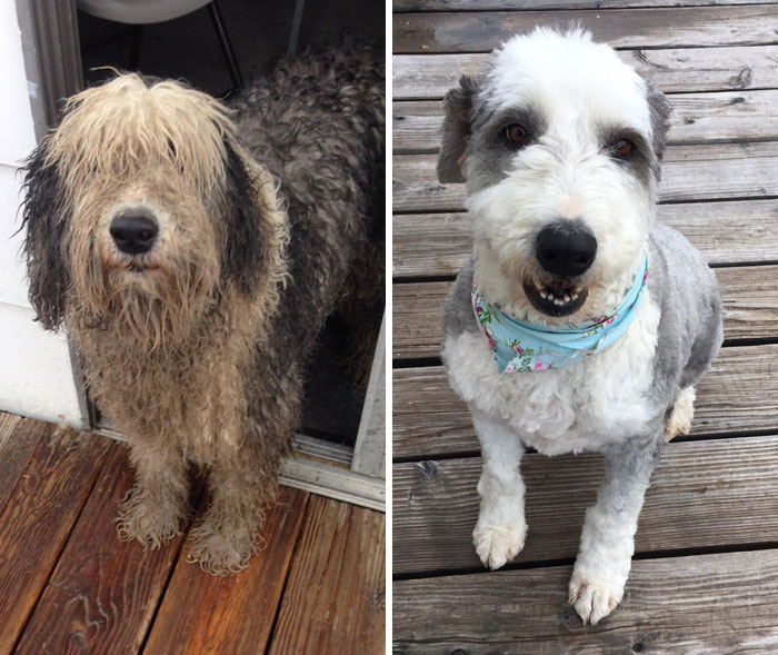 My Dog Courage Before And After Grooming