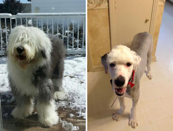 I Think The Groomer Gave Me Back The Wrong Dog