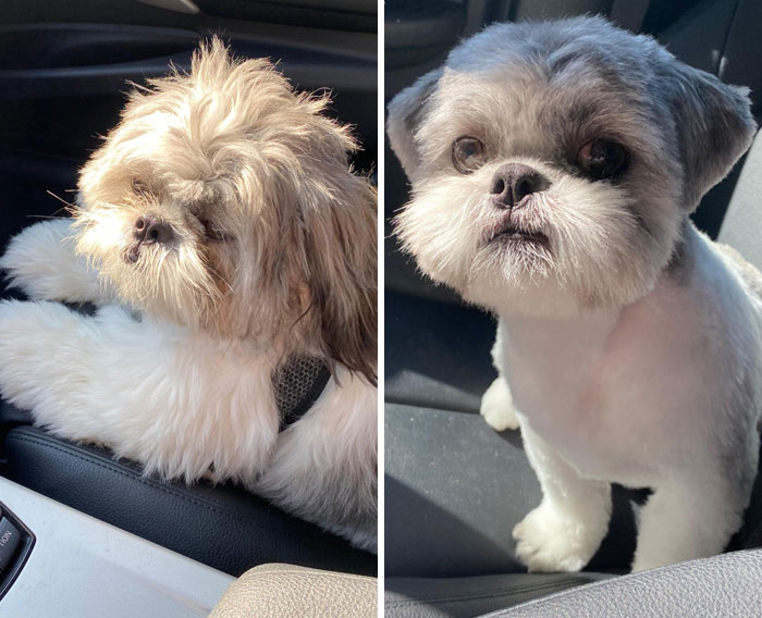 Raggamuffin To Stud Muffin. Quite The Transformation At The Groomer Today