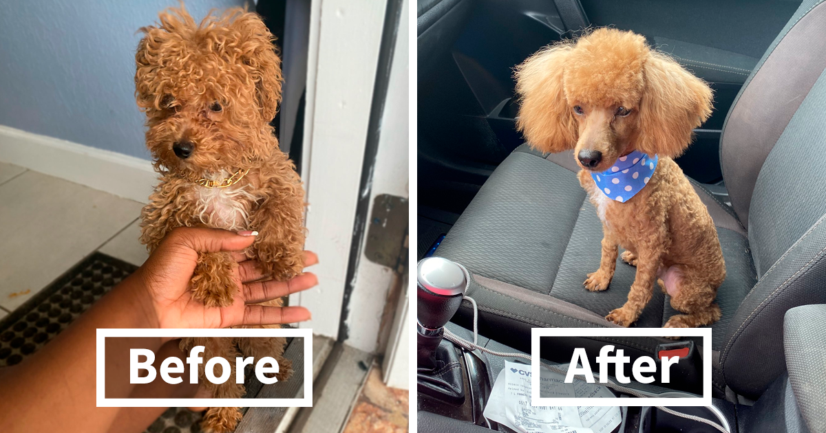 86 Times People Took Their Dogs To The Groomers And Thought They Got Back A Different Dog - bored panda