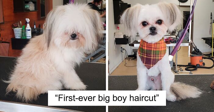 86 Times People Took Their Dogs To The Groomers And Thought They Got Back A Different Dog