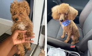 40 Personas que llevaron sus perros a la peluquería y creyeron que les devolvieron al perro equivocado