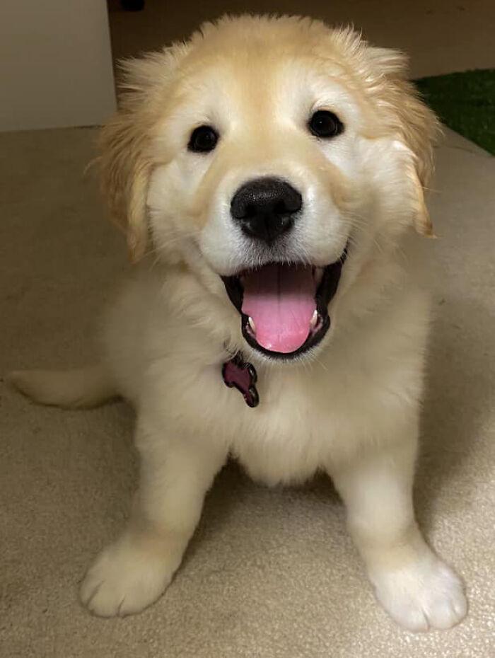 Dog-Pet-Model-Challenge-Facebook