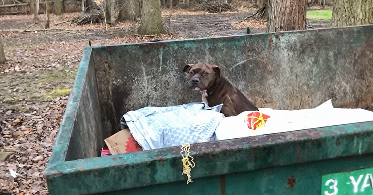 An Injured And Underweight Dog That Was Found In The Dumpster Is Now Under Care - bored panda