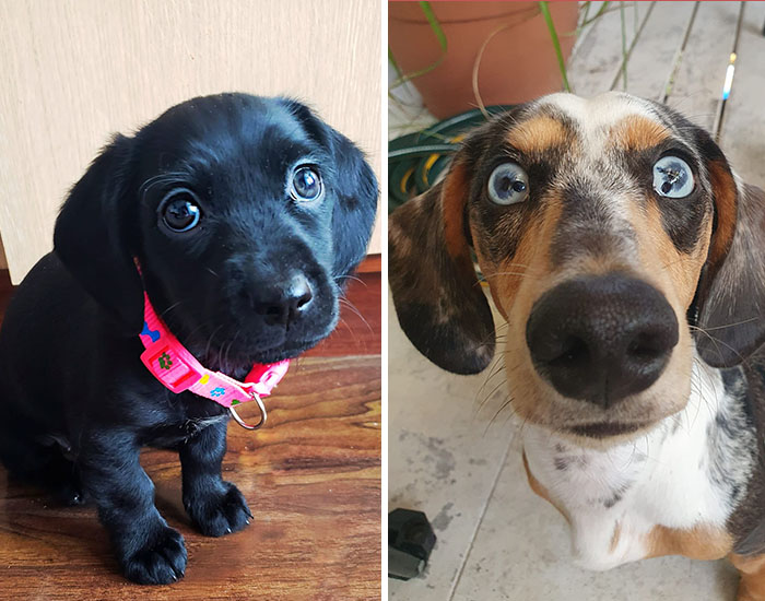 30 Of The Best Dog Photos Submitted For The #PrettyEyesChallenge