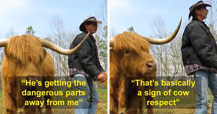 'If You're Being Poked, It's Intentional': Farmer's Video Where He Grooms A Long-Horned Scottish Highland Cow Goes Viral