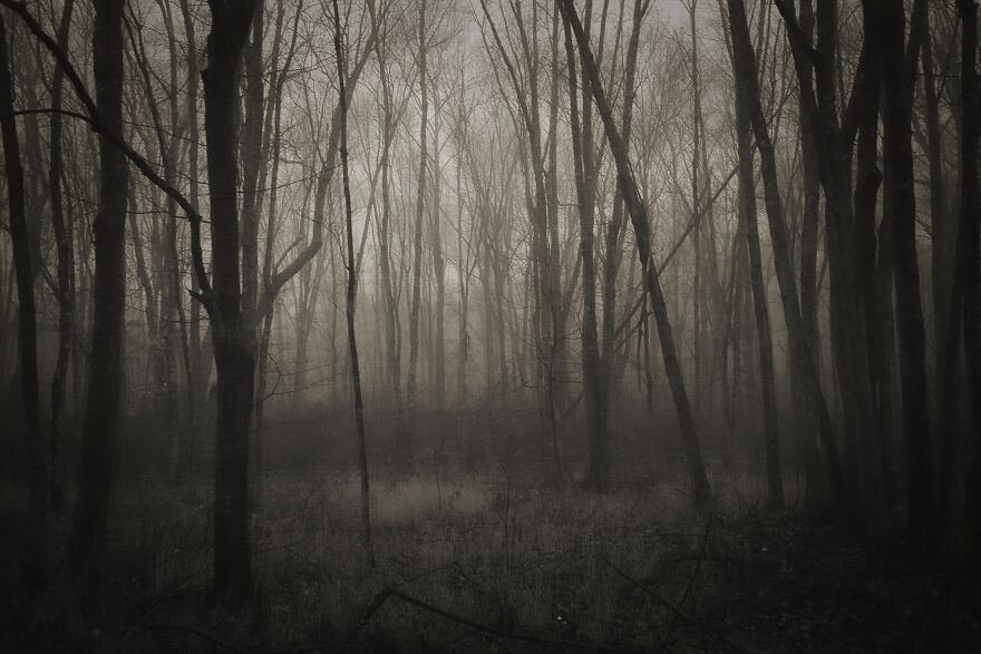 Foggy Morning In The Woods In Back Of Our House