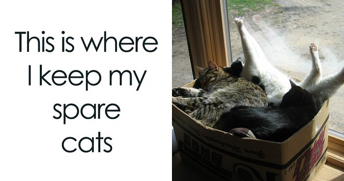 Cat Owners Are Making Memes About What It's Like Living With One And They're Spot-On (109 Pics)