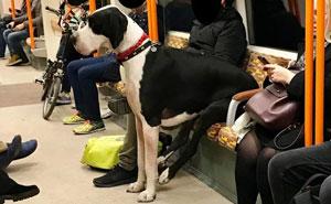 50 Perros de la raza Gran Danés que no son conscientes de su tamaño (Nuevas imágenes)
