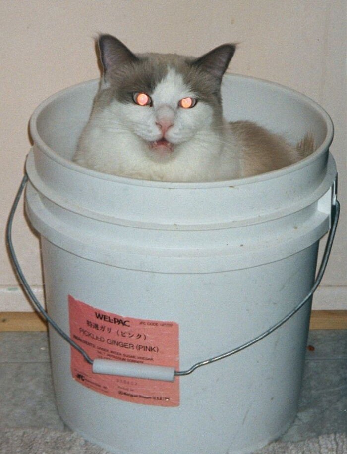 Gypsy In A Pickled Ginger Bucket
