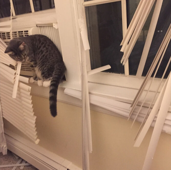 177 Times Pets Were Caught Destroying Something | Bored Panda