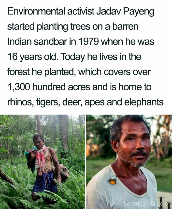 The Man Who Planted An Entire Forest!