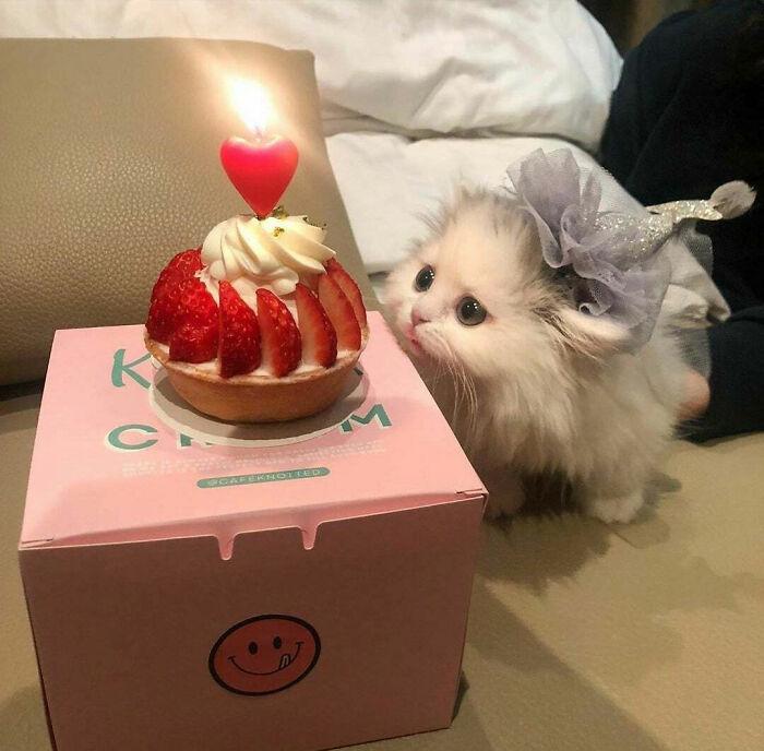 Los criminales también celebran su cumpleaños