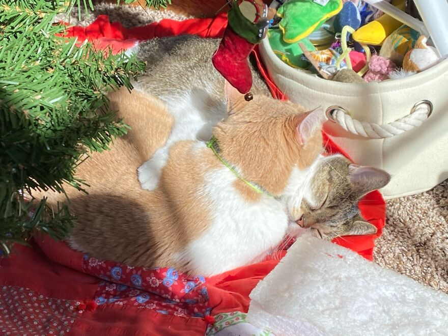 My Kitty Twins Sharing A Nap Between The Toy Box And Christmas Tree.