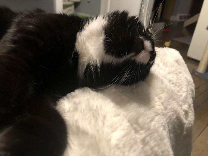 Always Sleeps Like This.