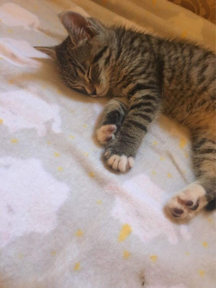 My Bff's New Kitten
