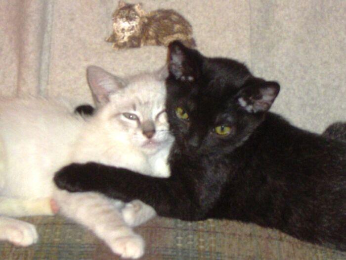 Best Friends As Soon As They Met. Rip Wendy And Ziva
