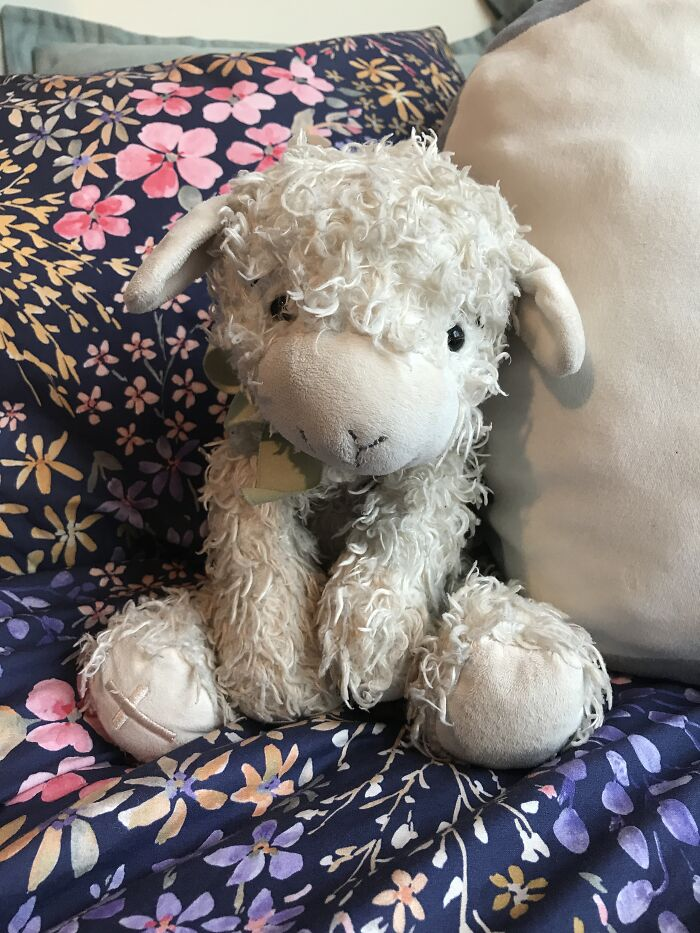 The Lamb I've Had Since I Was A Baby
