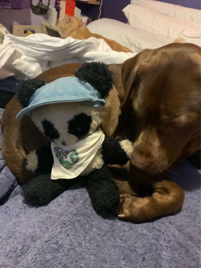 Tatty Panda. Is 9 Years Older Than Me (62)