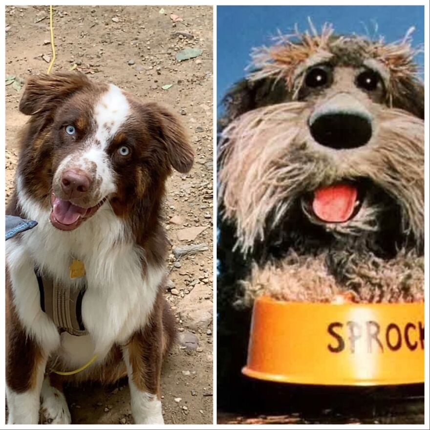 Sprocket The Wannabe Muppet And Sprocket The Real Muppet