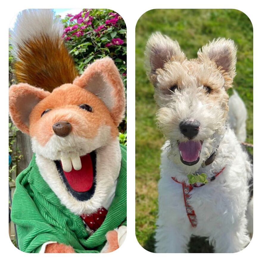 Basil Brush And Basil The Wire Fox Terrier!