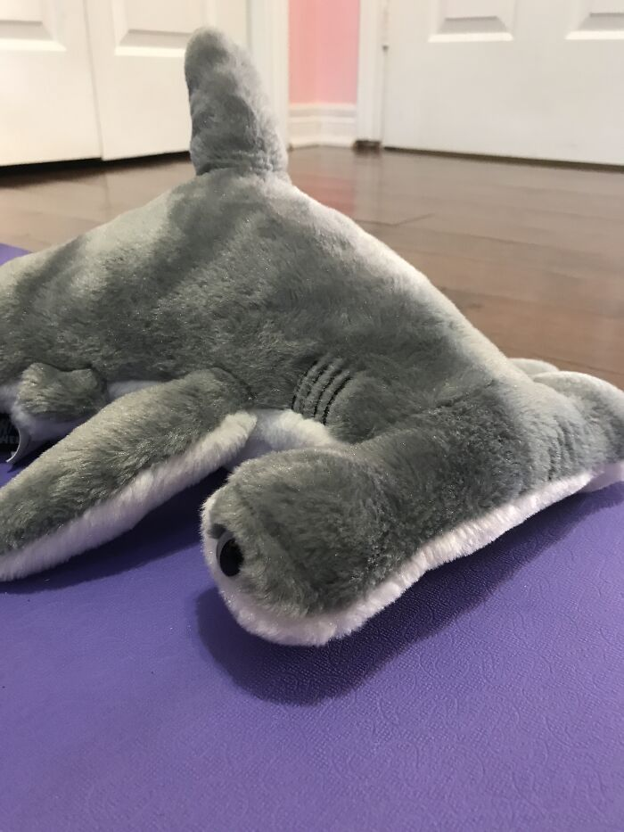 My Stuffed Shark, Named Sharky