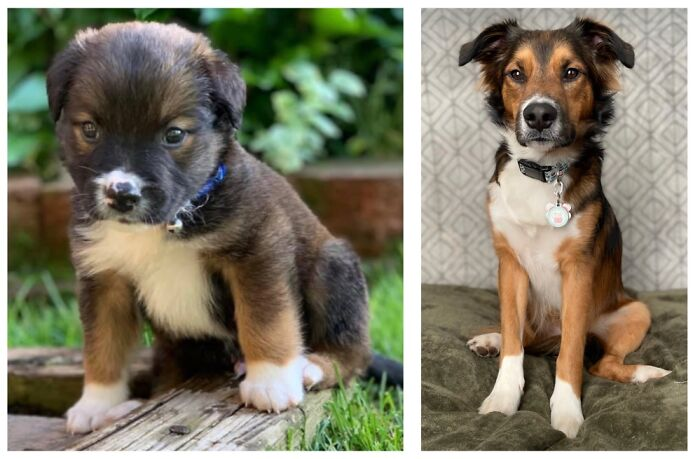 Gendry At 2 Months And 1.5 Years Old