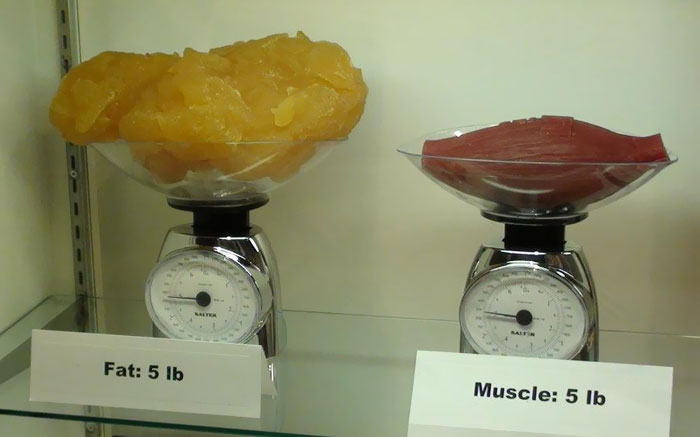 This Is What Really Got To Me. 5 Lbs Of Fat Compared To 5 Lbs Of Muscle
