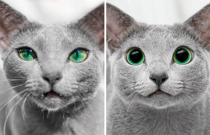 Same Cat's Eyes: Day vs. Night